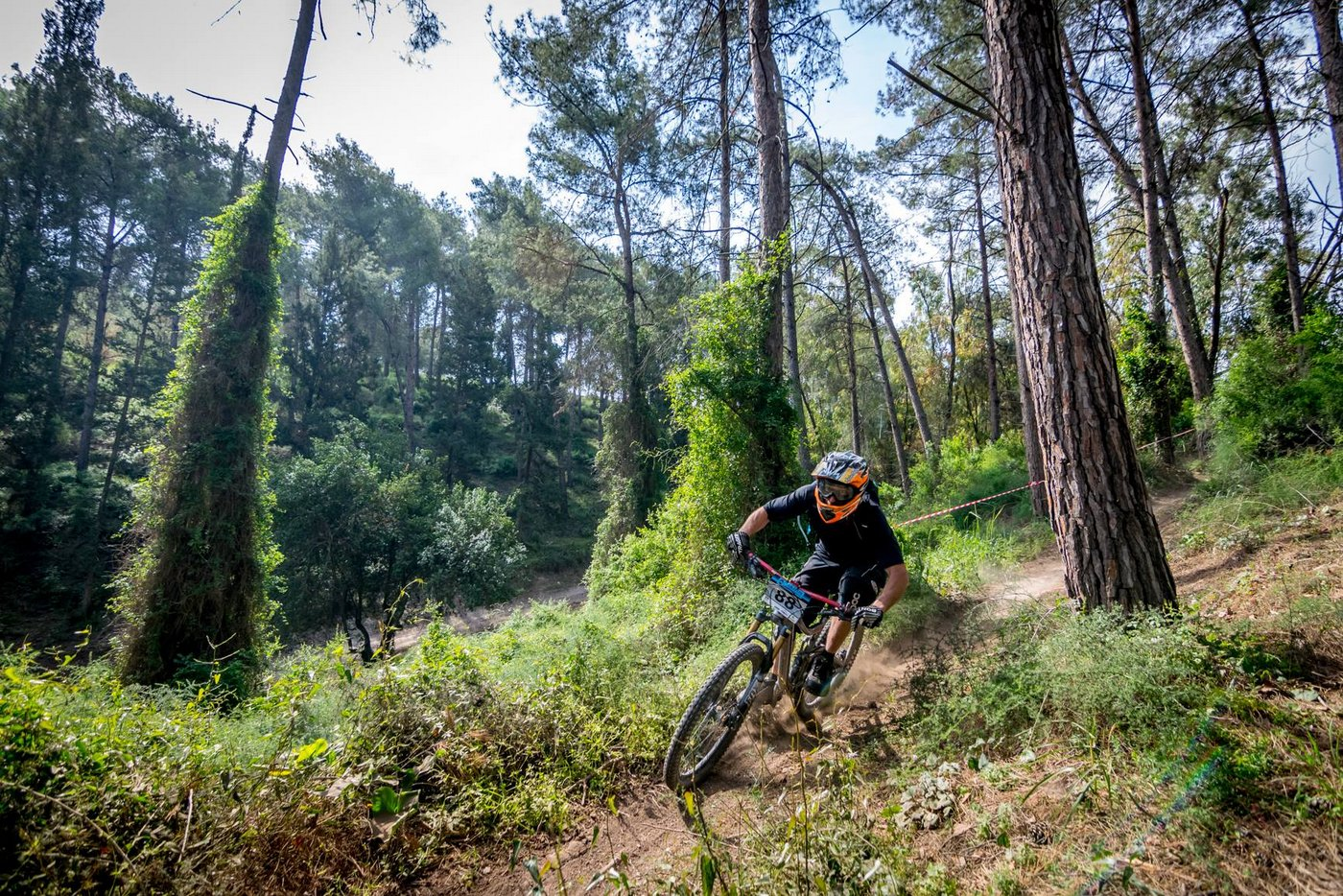 יער יפה ומסלול מהיר (צילם: עמית אחיאסף)