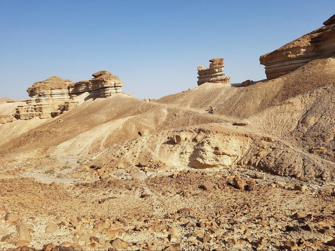 שבילי הפראים במדבר