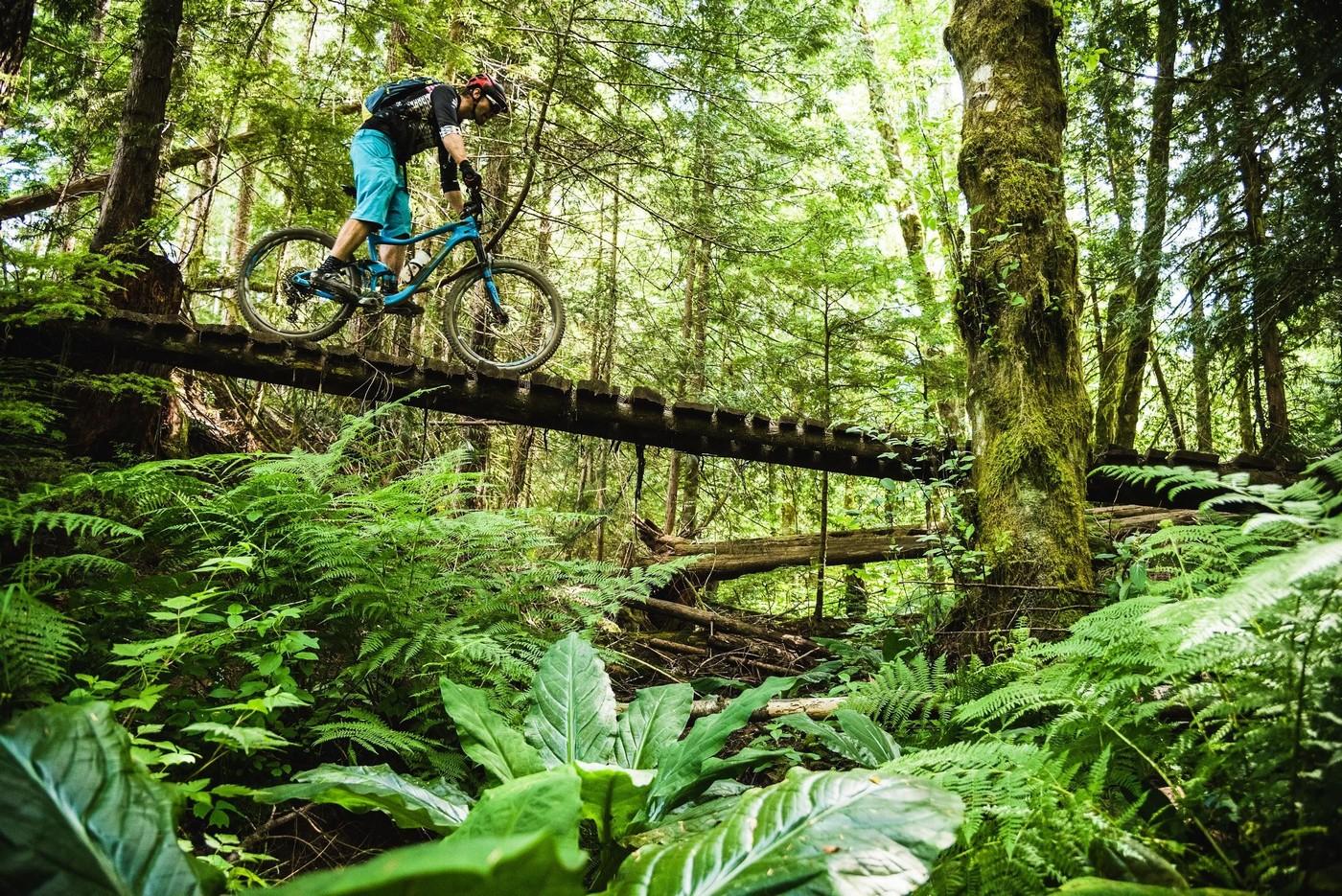 שורשים, סלעים, וגשרי עץ - יום טיפוסי ב-BCBR Todd Weselake :תמונה