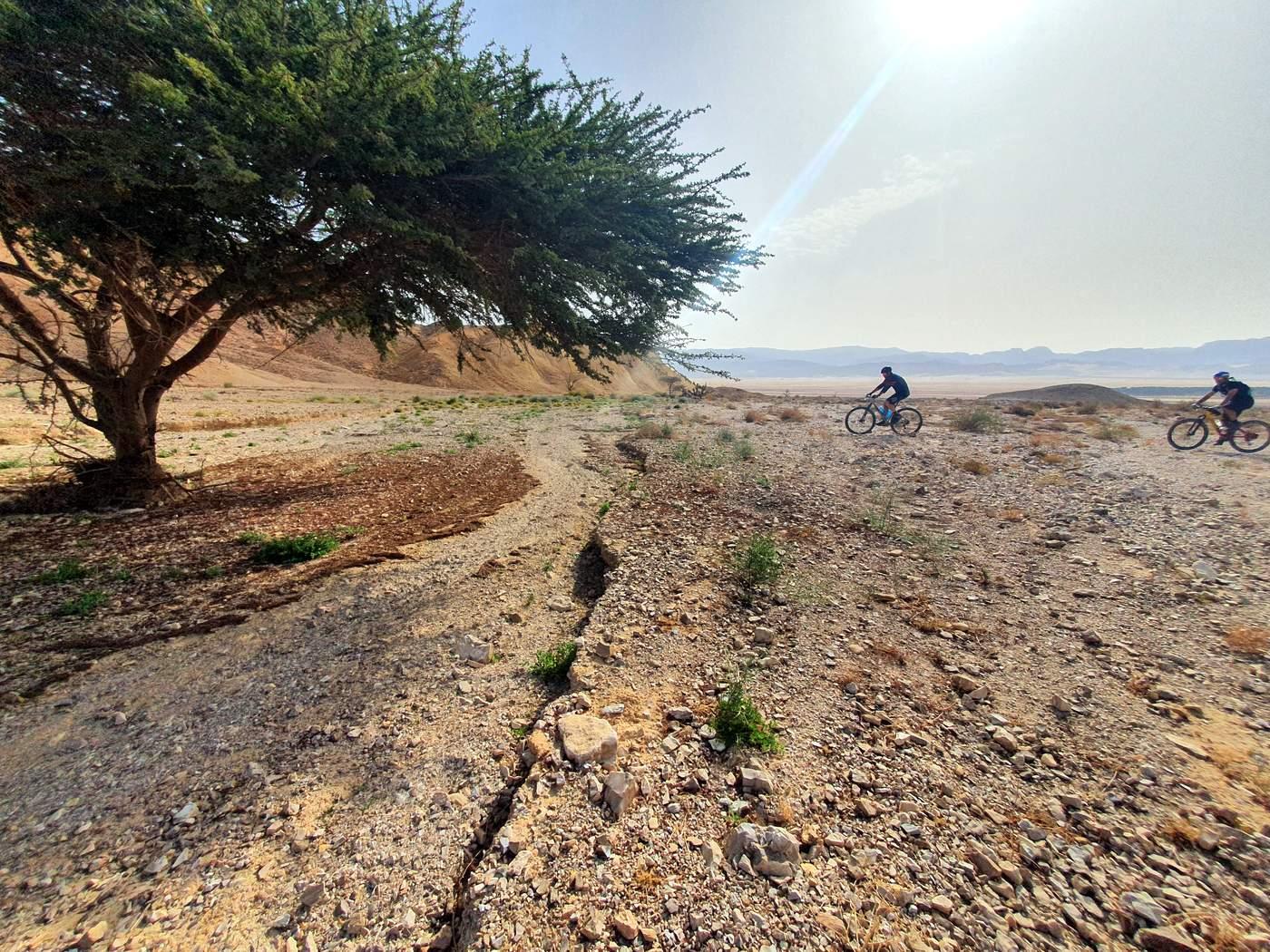 סינגלים במדבר הדרומי